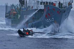 Cancelled or Renewed? Animal Planet renews Whale Wars for season six