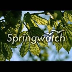 springwatch-cancelled-renewed-bbc-one