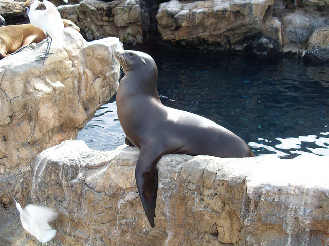 seal-seaworld-orlando