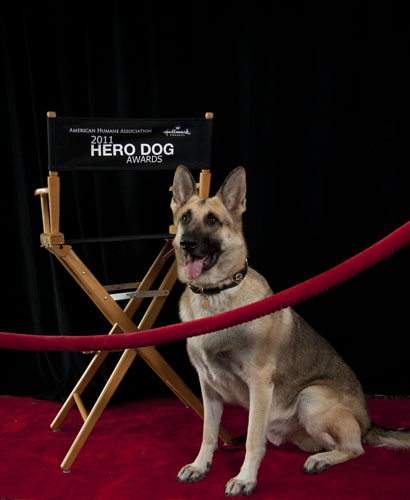 You can now nominate your dog for 2nd Hero Dog Awards