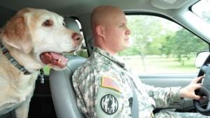 Kristin Chenoweth to host 2nd Annual American Humane Association Hero Dog Awards